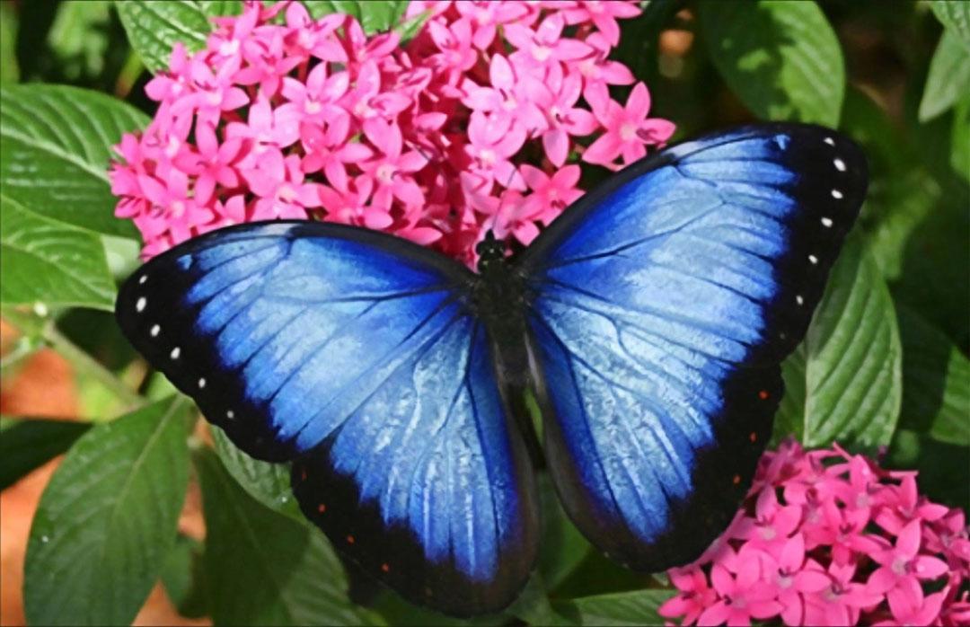 Joyful Discomfort - Blue Butterfly